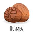 nutmeg icon cartoon style vector image vector image