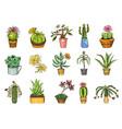succulents set cactus peyote echeveria vector image vector image