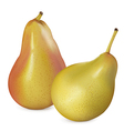 Pears on white vector image