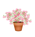 A Lovely Pink Flowering Plants in Flower Pot vector image vector image
