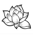 lotus flower silhouette 01 vector image vector image