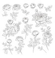 rose bud collection elements roses isolated on vector image