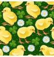 Seamless chicken and clover vector image vector image