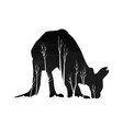 silhouette of a kangaroo with pine forest vector image vector image