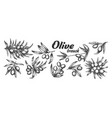 assortment different olive branch set ink vector image