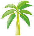 banana tree on white background vector image