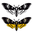 Deaths head hawk moth vector image vector image