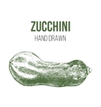 hand drawn zucchini vector image vector image