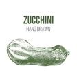 hand drawn zucchini vector image