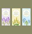 lavender and olibanum set vector image