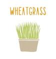 Wheatgrass vector image vector image