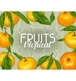 Frame with mandarins Tropical fruits and leaves vector image vector image