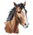 horse head watercolor vector image vector image