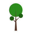 isolated tree icon vector image