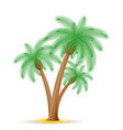palm tree 24 vector image
