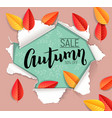 autumn sale design banner vector image