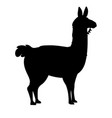 black silhouette llama cartoon animal design vector image vector image