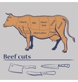 cuts of cow vector image