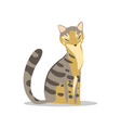beautiful gray cat with tabby pattern light brown vector image