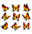 Beautiful orange butterfly in different positions vector image vector image
