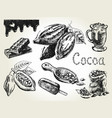 cocoa set engraving vector image