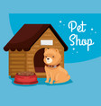 pet shop veterinary vector image vector image