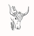 sketch yak head with big horns hand drawn vector image