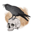 raven and skull on sepia background vector image