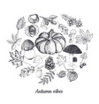 autumn botanical sketches isolated on white vector image vector image