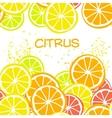 background orange green yellow citrus vector image