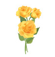 flower rose bouquet isolated on white background vector image vector image