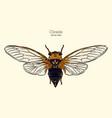 cicada hand draw sketch vector image vector image