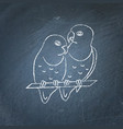 lovebird parrots icon sketch on chalkboard vector image vector image