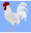 white rooster in Color vector image