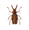 Big Beetle Deer with Horns vector image vector image