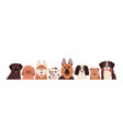 portrait group funny dogs different breeds vector image vector image