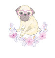 pug puppy vector image vector image