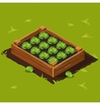 Vegetable Garden Box with Cabbage Set 9 vector image