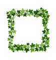 green ivy creeper plant square wreath isolated on vector image vector image