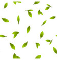 green leaves twigs cartoon seamless vector image