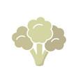 vegetable cauliflower cabbage piece vector image