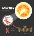 genetics dna structure vector image