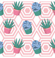 desert plants pattern background vector image vector image