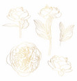 peonies golden outline set on white background vector image