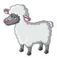 young sheep icon cartoon style vector image