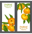 Banners with mandarins Tropical fruits and leaves vector image vector image