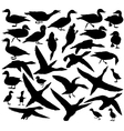 Duck silhouettes vector image vector image
