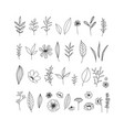 hand drawn floral collection on vector image vector image