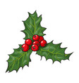 mistletoe branch with leaves and berries vector image vector image