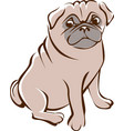 pug outline drawing vector image vector image